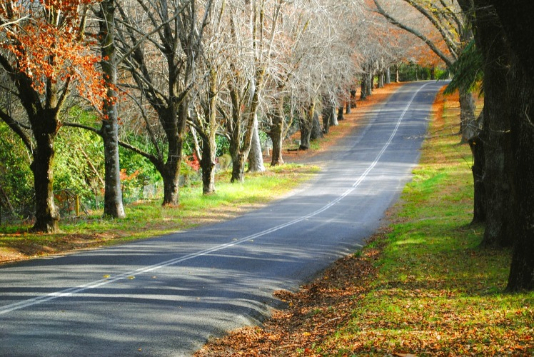 road-780544_1280