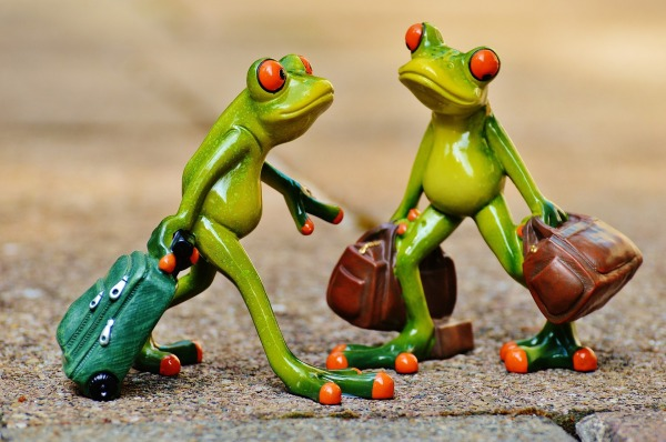 frogs-897387_1920